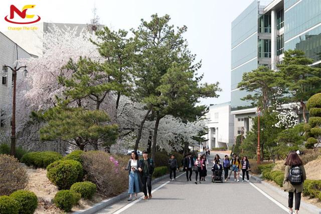 có nên du học Hàn Quốc