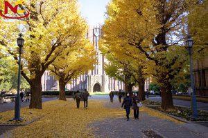 Vài nét về Trường đại học Tokyo – Nhật Bản