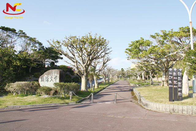 Học ngành quản trị khách sạn đại học Ryukyus