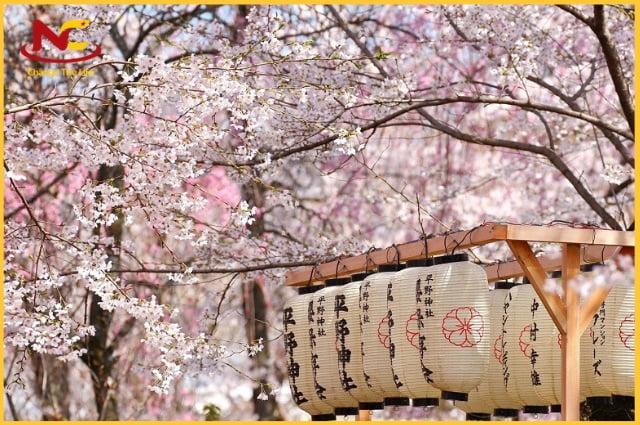 Thời tiết Nhật Bản vào mùa xuân