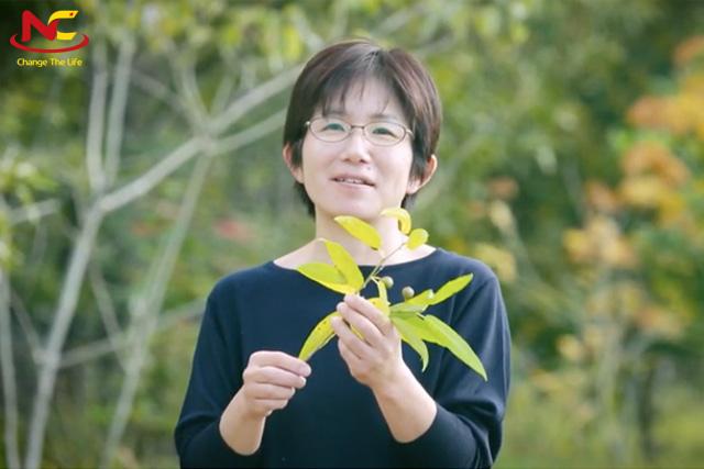 Du học ngành nông nghiệp tại đại học Kyoto