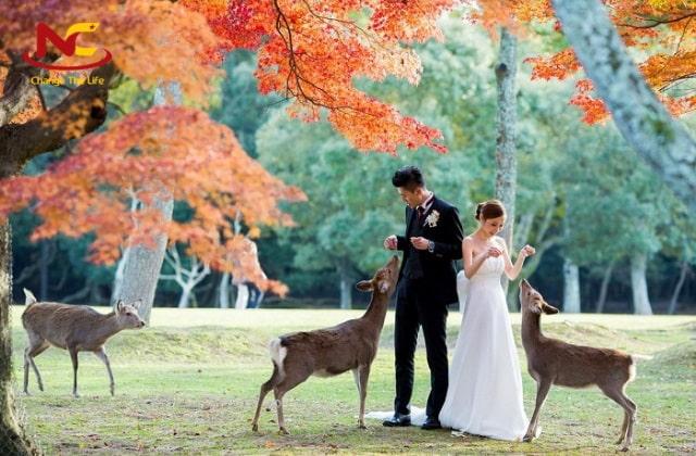 Địa điểm du lịch công viên Nara