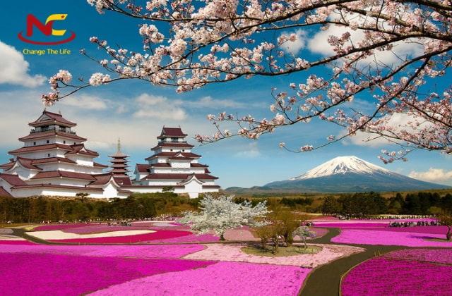 Du lịch Nhật Bản tại cánh đồng hoa