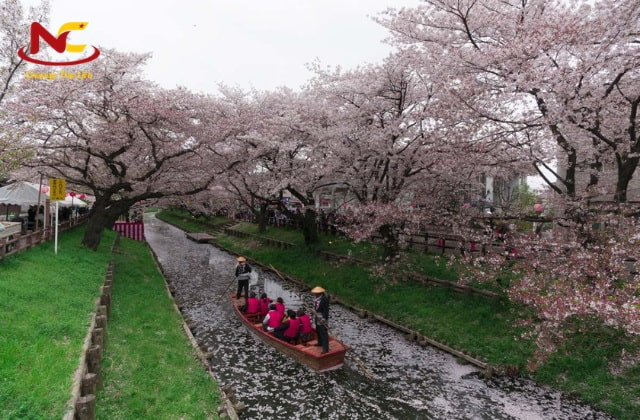 Du lịch sông Kawagoe