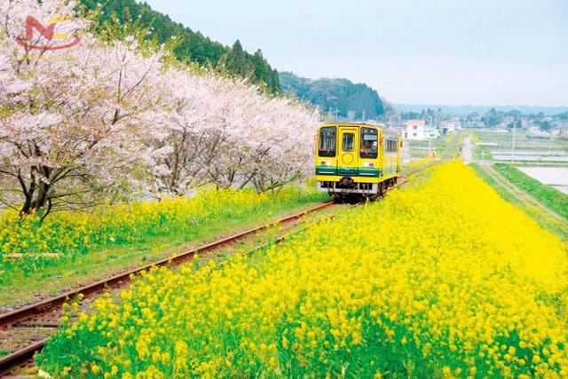 Khí hậu tỉnh Chiba