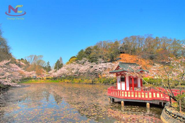 Tìm hiểu về tỉnh Chiba Nhật Bản