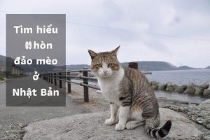 9 đảo mèo Nhật Bản đẹp và đặc biệt nhất của sứ xở mặt trời mọc