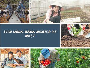 Tuyển gấp 12 nữ làm nông nghiệp tại tỉnh KANAGAWA – Nhật Bản